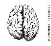 hand drawn human brain   top... | Shutterstock .eps vector #485246437