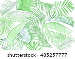 leaf of palm tree background | Shutterstock . vector #485257777