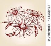 daisy  hand drawn vector... | Shutterstock .eps vector #485265487