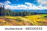 forrest of green pine trees in... | Shutterstock . vector #485330533