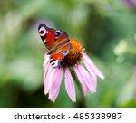 Vivid Dark Butterfly Admiral I...