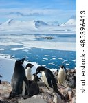 Small photo of Penguin colony in antarctica