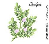 chickpea   cicer arietinum ... | Shutterstock .eps vector #485422693