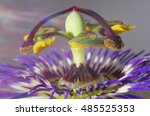 Passion Flower   Passiflora...