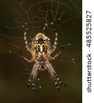 Small photo of Macrophotography of an arachnid (Aculepeira ceropegia)