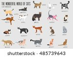 Vecto  Breed Cats Icons Set....