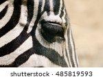 Close Up Of Zebra Eye With Lon...