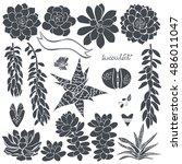 succulents. vector set of ... | Shutterstock .eps vector #486011047