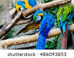 big multicolored parrot closeup | Shutterstock . vector #486093853