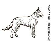 dog hand drawn. alsatian.... | Shutterstock .eps vector #486103903