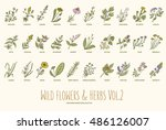wild flowers and herbs hand... | Shutterstock .eps vector #486126007