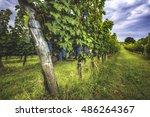 grape harvest at the world... | Shutterstock . vector #486264367
