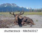 Small photo of Alaskan moose postal on vacation.