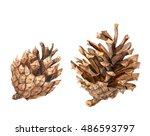 set of pine cones  brown on...   Shutterstock . vector #486593797