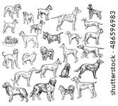 vector. breeds of dog set. hand ... | Shutterstock .eps vector #486596983