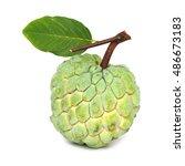 custard apple fruit isolated on ... | Shutterstock . vector #486673183