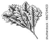 hand drawn ink rustic oak leaf  ... | Shutterstock .eps vector #486724423
