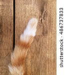 Tail Of A Cat On Wooden...
