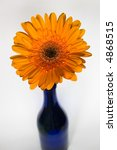 Blue vase with orange gerbera flower - stock photo