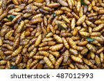 edible insect  background... | Shutterstock . vector #487012993