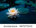 beautiful lotus flower in pond... | Shutterstock . vector #487075543