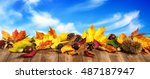 colorful autumn leaves  cones... | Shutterstock . vector #487187947