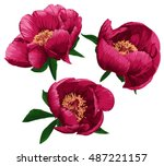 Peony Set. Vector Illustration