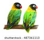 Masked Lovebird Green Drawing ...