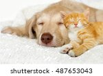 Stock photo lovely puppy and ginger kitten sleeping on a white bedspread 487653043