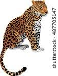 vector leopard panthera pardus   Shutterstock .eps vector #487705147