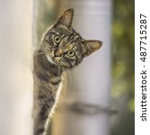 Curious Kitten Peeking Out Of...
