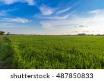 cornfield and evening... | Shutterstock . vector #487850833