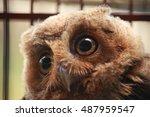 animal photo  portrait of an... | Shutterstock . vector #487959547