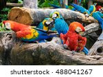 Group Of Colorful Parrot On...
