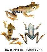 convict treefrog  hypsiboas...   Shutterstock . vector #488066377