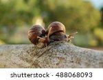 Two Snail Take A Walk On Early...