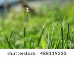 close up of a lovely piece of... | Shutterstock . vector #488119333