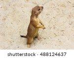 portrait of black tailed... | Shutterstock . vector #488124637