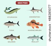 set of color flat sea fish... | Shutterstock .eps vector #488285077