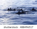 dolphins at black river ... | Shutterstock . vector #488496517