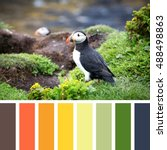 a puffin on the cliffs of... | Shutterstock . vector #488498863