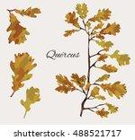 oak tree leaf set | Shutterstock . vector #488521717
