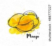vector hand drawn mango on a... | Shutterstock .eps vector #488777227