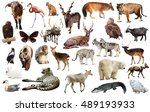 assortment of many kind of... | Shutterstock . vector #489193933