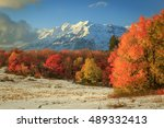 amazing fall color with fresh... | Shutterstock . vector #489332413