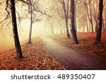 autumn landscape with bare... | Shutterstock . vector #489350407