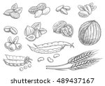 nuts  grain  berries sketches ... | Shutterstock .eps vector #489437167