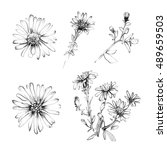 white and black pencil flower...   Shutterstock . vector #489659503