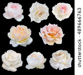 Collage Of White Roses Isolate...