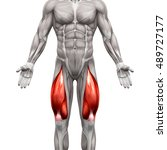 quadriceps male muscles  ... | Shutterstock . vector #489727177